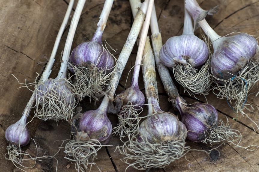 garlic-927843_1920